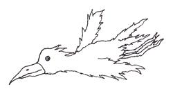 Phoenix Sketch 6